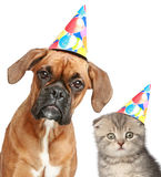 Dog and cat in party cap on white background stock image