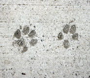 Dog and Cat paw prints. In cement - dark grey on white grey royalty free stock photo
