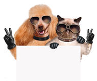 Dog and cat with peace fingers in black leather gloves Stock Photos