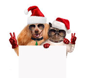 Dog and cat with peace fingers in red Christmas hats. The white banner Stock Images