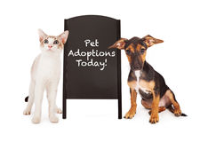 Dog and Cat With Pet Adoption Sign. A young puppy and a kitten standing on the sides of a black chalkboard A-frame sign with the words Pet Adoptions Today royalty free stock photo