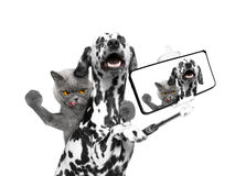Dog and cat photographed selfie on the phone. Isolate on white background stock photo