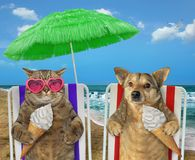 Dog and cat eating ice cream under a umbrella 2 stock photos