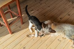Dog and cat playing. With natural light. Nature Stock Photo