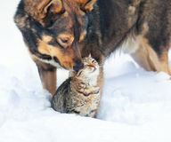 Dog and cat playing in the snow Royalty Free Stock Images
