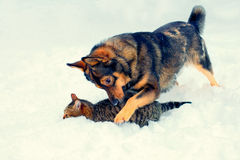 Dog and cat playing in the snow Stock Photos