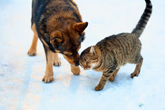 Dog and cat playing in the snow Royalty Free Stock Image