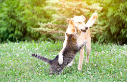Dog and cat playing stock photo