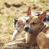 Dog and cat playing together royalty free stock photography