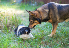 Cat and Dog. Dog and cat playing together outdoor royalty free stock photos