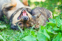 Dog and cat playing together Stock Photos