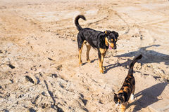 Dog and cat playing together outdoor Royalty Free Stock Photo