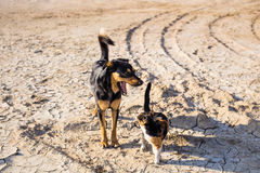 Dog and cat playing together outdoor Royalty Free Stock Photography
