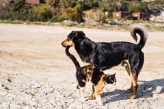 Dog and cat playing together outdoor Stock Photography