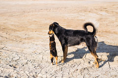 Dog and cat playing together outdoor Stock Images