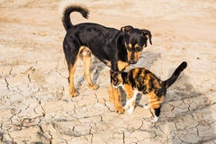 Dog and cat playing together outdoor Royalty Free Stock Photos