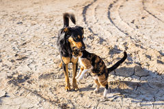 Dog and cat playing together outdoor Royalty Free Stock Images