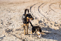 Dog and cat playing together outdoor Royalty Free Stock Image