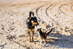 Dog and cat playing together outdoor Stock Photos