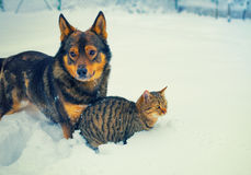 Dog and cat playing together Stock Image