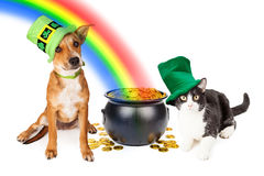 Dog and Cat With Pot of Gold and Rainbow. Cat and dog wearing Irish St. Patrick's Day hats sitting next to a pot of gold at the end of a rainbow Stock Images