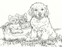 Dog, cat, puppies eat together from the bowl. Stock Images