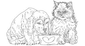 Dog, cat, puppies eat together from the bowl.  Royalty Free Stock Photos