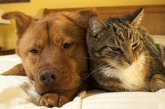 Dog and cat relaxing Royalty Free Stock Photos