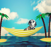 Dog and cat relaxing. Holiday and travel Stock Images