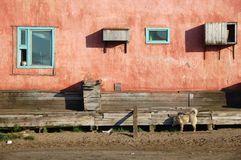 Dog and cat at residential building at Chukotka Stock Images