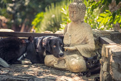 Dog and cat rest on a  Buddha statue on stone steps Stock Photo