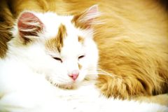 Dog and cat resting together. Dog and cat sleeping together relaxed stock images