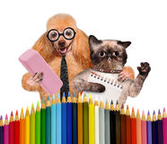 Dog and cat with school supplies Stock Images