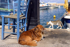 Dog and cat at the seaside. A beauiful sunny day on the beach, at the port in Greece, two animals a cat and a dog chilling out in the sun, lying lazily and Stock Images