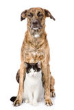 Dog and cat sitting in front. isolated on white background Stock Photos