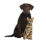 Dog and cat sitting, isolated. On white stock image