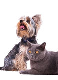 Dog and cat sitting next to Royalty Free Stock Images