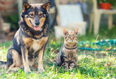 Dog and cat sitting next to each other Stock Images