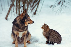 Dog and cat sitting together in the snow Stock Image