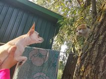 Dog and cat. Cat is sitting on the trees Royalty Free Stock Photo