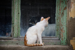 Dog and cat sitting on the windowsill looking at each other Stock Photography