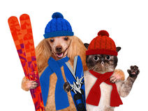 Dog with a cat with skis Royalty Free Stock Image