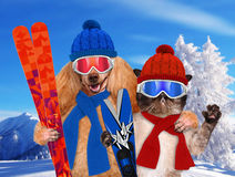 Dog with a cat with skis. Mountains in the background Royalty Free Stock Photography