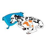 Dog and cat sleep Stock Photos