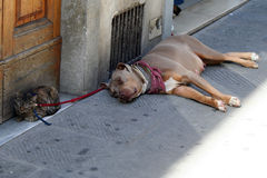 Dog and cat. Sleep hiding from the heat in the shade stock photo