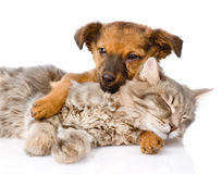 Dog and cat sleeping. isolated on white background Royalty Free Stock Photos