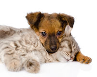 Dog and cat sleeping. isolated on white background Royalty Free Stock Photography