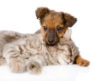 Dog and cat sleeping. isolated on white background Stock Image