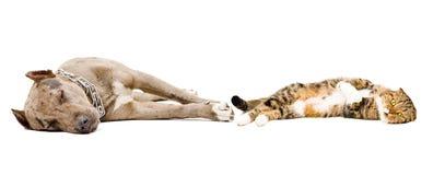 Dog and cat sleeping together stock photos