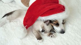 Dog and cat sleeping under christmas hat stock footage